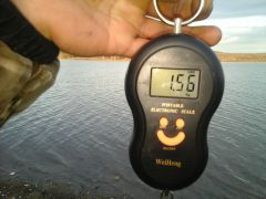23.02.16 вес 2